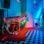 Event scenography & light design